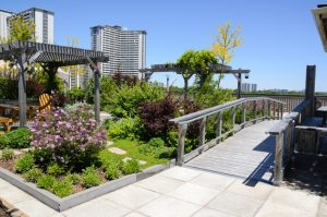 Rooftop garden in urban setting