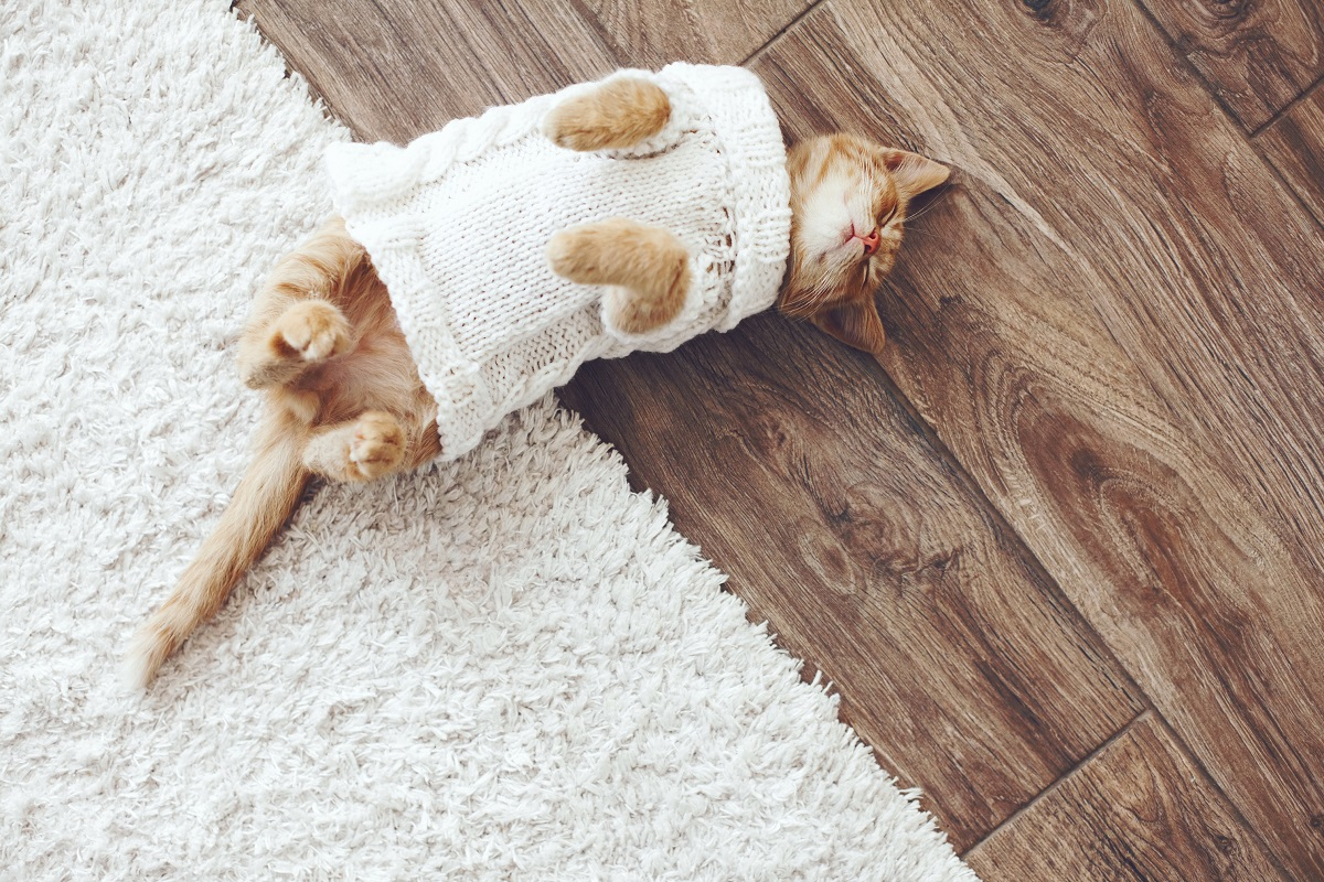 cat wearing a knitted sweater